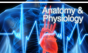 Anatomy__Physiology